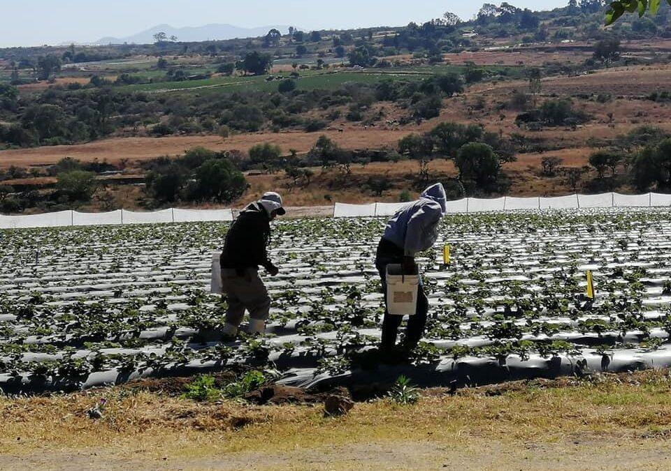 Programa Agrícola Sustentable se implementó en Michoacán