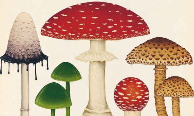 No es lo mismo: Libro de hongos que Hongos en libro…