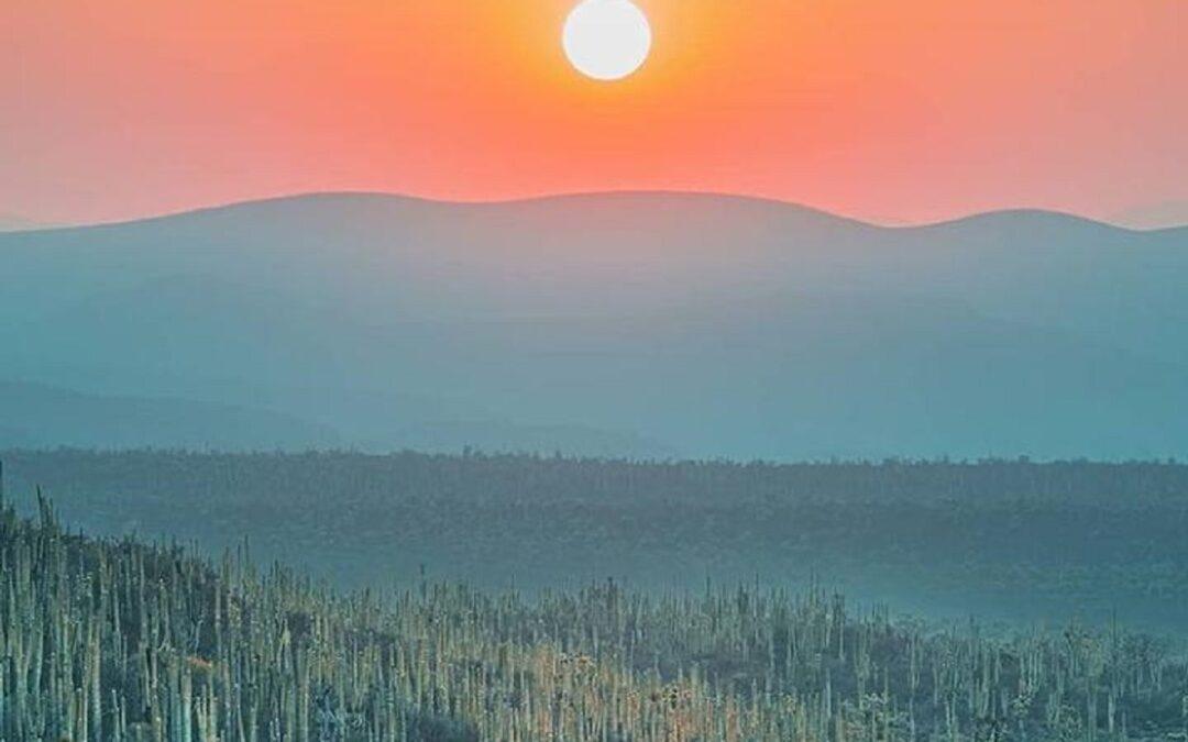 Conoce el Valle de Tehuacán, el lugar con más biodiversidad