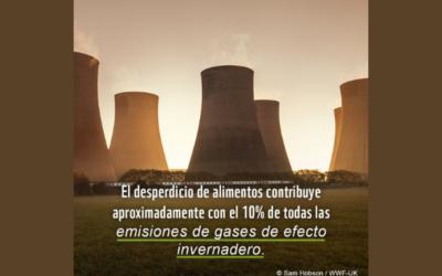 40% de los alimentos son desperdiciados en el mundo: WWF