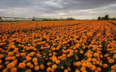 Xochimilco ya se prepara para el día de muertos